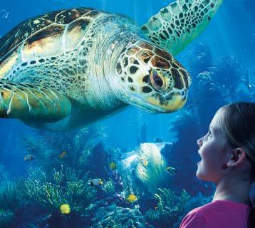 Young girl watching Green Turtle at Loch Lomond Sea Life Aquarium