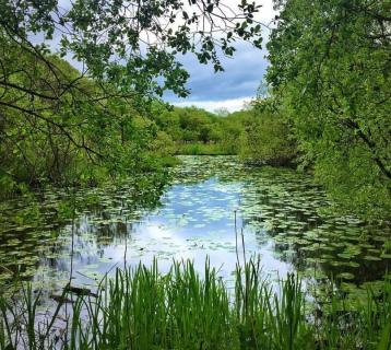 Pond dipping and bird watching at RSPB Lochwinnoch