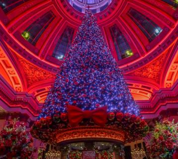 Fairy lit Christmas tree under the Dome