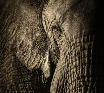 Photograph of an elephant by David Lloyd